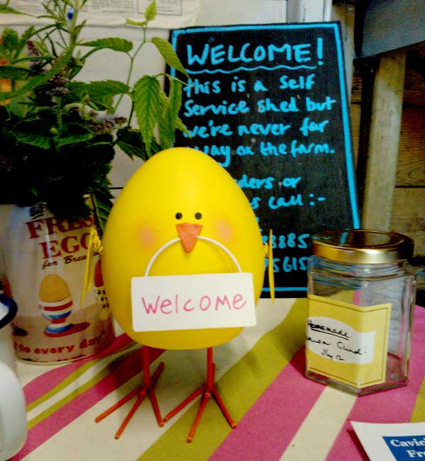 This little chicken sums up how the shed makes you feel, welcomed.