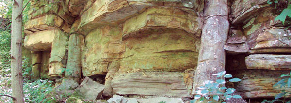 A polystrate fossil - a fossilised tree through multiple rock strata.